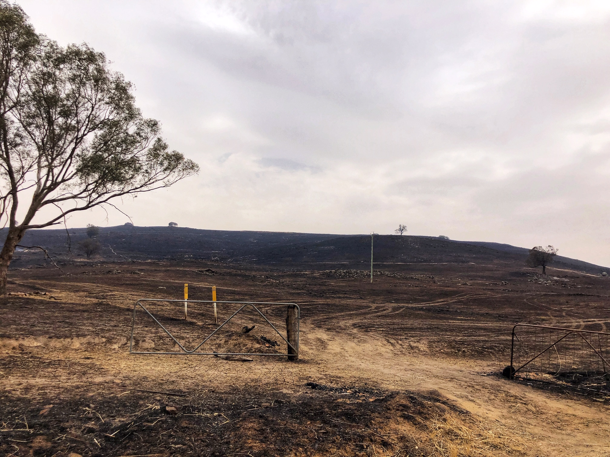 An open gate and burnt and blackened hill side following the Dunns Road fire.