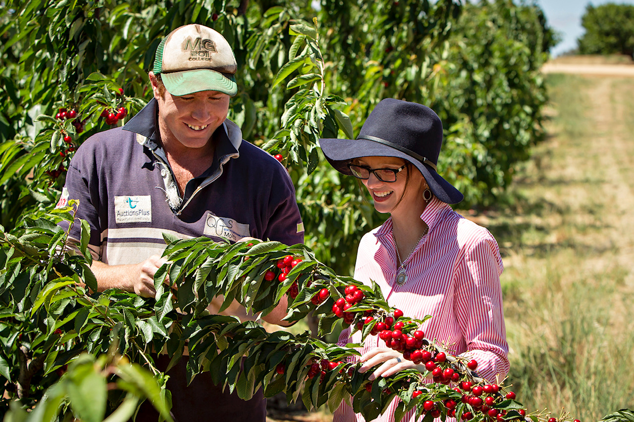 Steph Cooke and a farmer look at cherries on a tree.